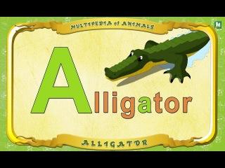 Multipedia of Animals - Letter A  -  Alligator