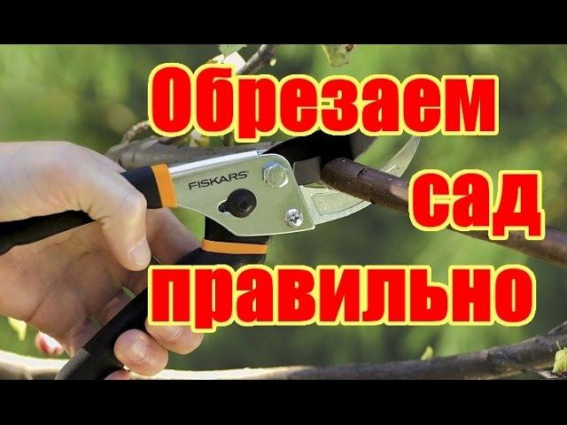 Как правильно обрезать и формировать фруктовые деревья Весенняя обрезка деревьев в саду