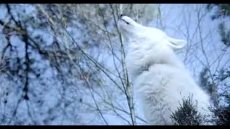 Выживая с волками Survivre avec les loups 2007 ВDRiр 720р Feokino