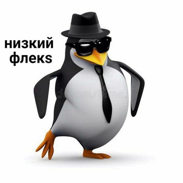 Картинки с пингвином мем