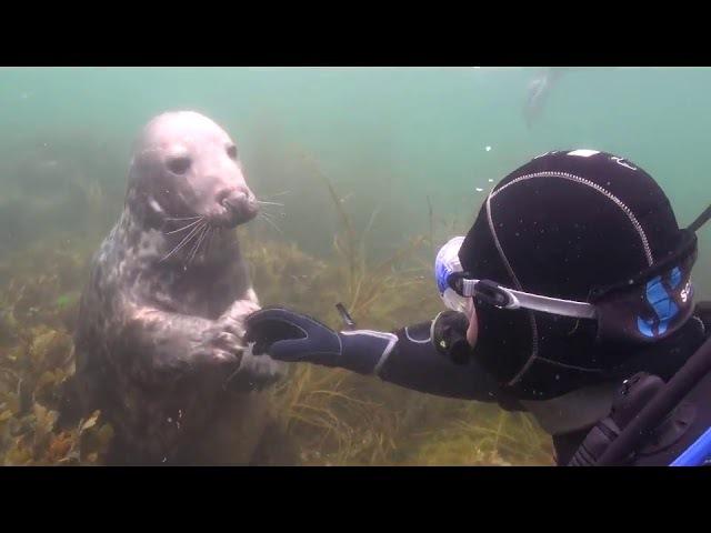 Тюлень подплыл к аквалангисту и показал лапкой ЧЕГО именно хочет