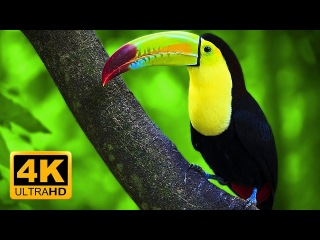 Breathtaking Colors of Nature in 4K III 🐦Beautiful Nature - Sleep Relax Music 4K UHD TV Screensaver