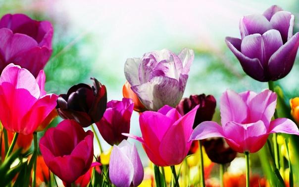 Обои На Телефон Красивые Скачать Бесплатно Цветы