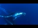 BBC Морские гиганты Жизнь гигантов 2011