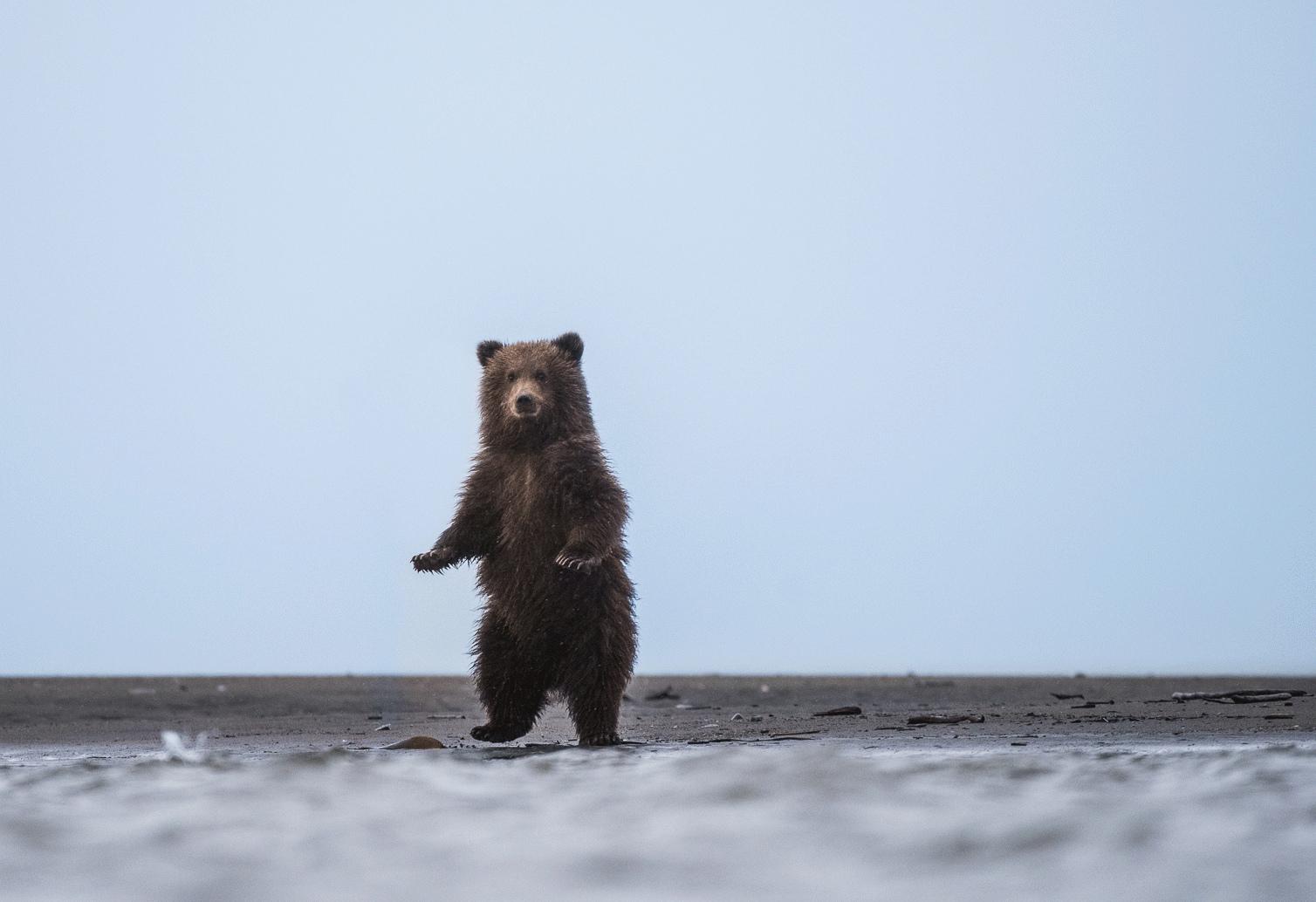 тем гиф с медведями очень