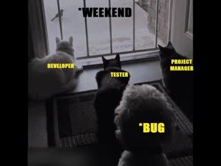 Wen suddenly a bug enter in a program while finalization _reactions_ developer_tester_pm
