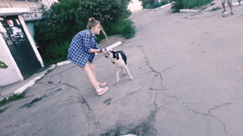 Husky islove