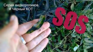 Экологическая катастрофа в Новокузнецке (видеоролик из серии #Чёрный КОТ)