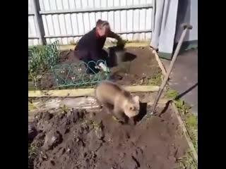 Мне срочно нужен такой мишка-огородник - vk.com/cottagers