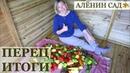 10 лучших сортов перца в открытом грунте Воловье ухо Лэся Гогошары и др