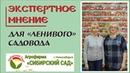 Сибирский сад Сорта томатов перца баклажанов для ленивого садовода