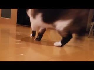 実家のたぬき猫ほんと好き