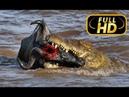 СУПЕРХИЩНИКИ. КРОКОДИЛ / FULL HD - Документальный фильм на Amazing Animals TV