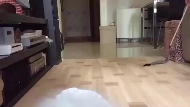 Самый пушистый кот........какая прелесть...