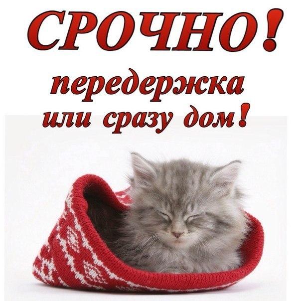 Открытки, картинки котенку нужен дом или передержка