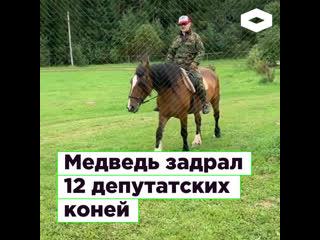 Медведь задрал 12 коней депутата-миллиардера | romb