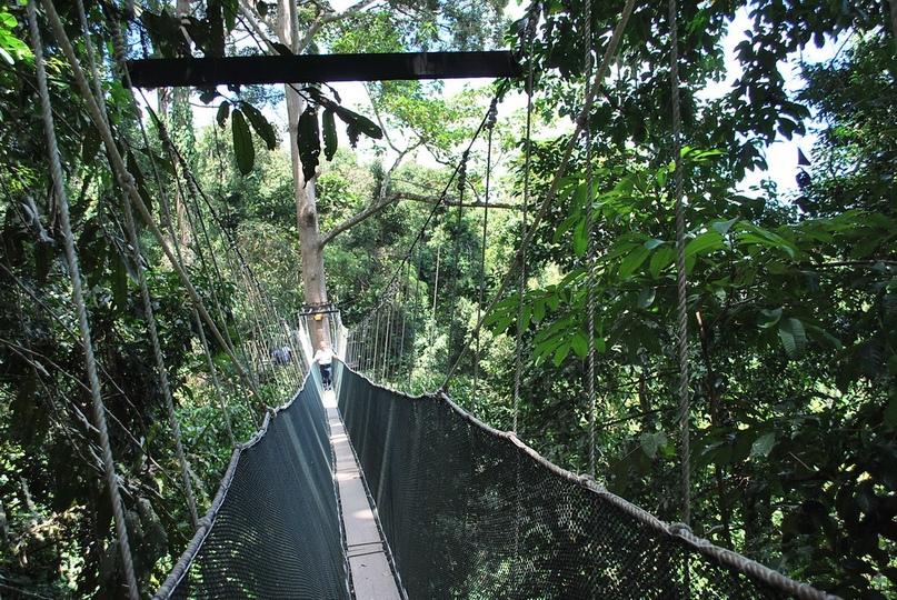 Подвесные мосты на Борнео, изображение №3