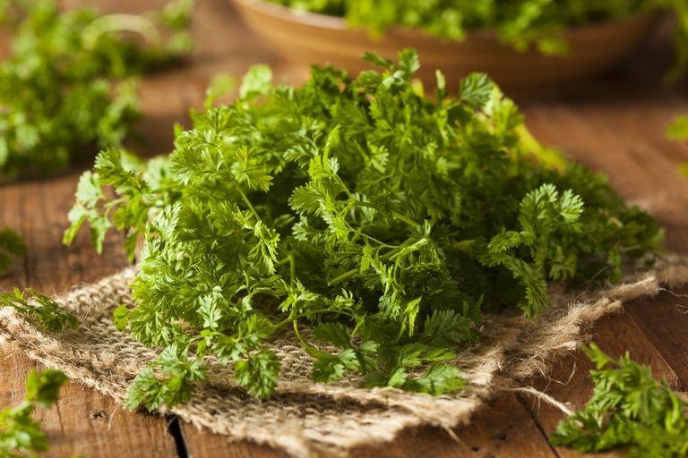 10 трав, которые можно выращивать на подоконнике круглый год