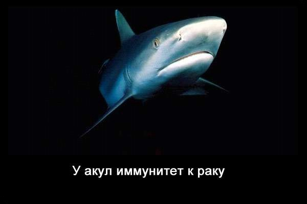 Valteya - Интересные факты о акулах / Хищники морей.(Видео. Фото) - Страница 2 B8S0Cwunn0Y