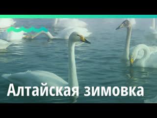 Праздник Алтайская зимовка прошёл на Бирюзовой Катуни