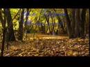 И Горбушин Желтые листья