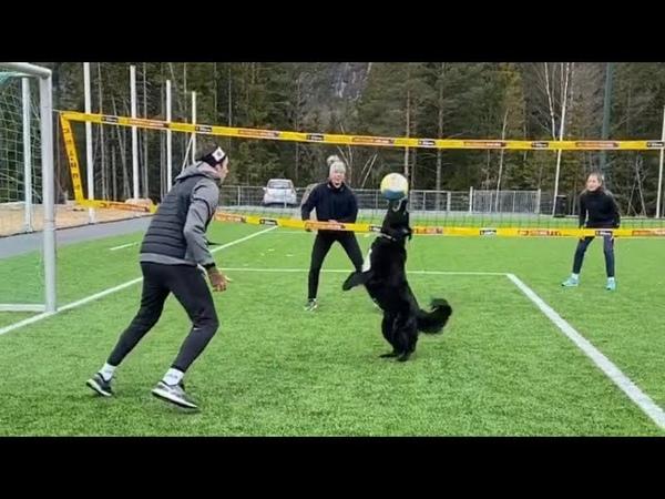 ORIGINAL VIDEO Kiara the Volley Dog playing 2 vs. 2 Volleyball!