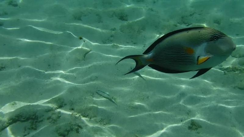 подводный мир Краного моря