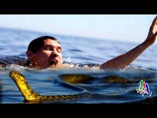 Змея попыталась залезть на голову купающемуся в речке мужчине