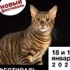 Фестиваль кошек породы Тойгер