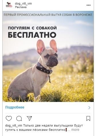 Кейс: продвижение стартапа по выгулу собак, изображение №20