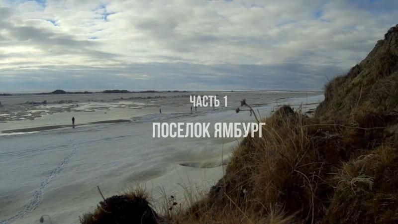 Птицы Тазовского полуострова. Экспедиция 2019. Часть 1. Ямбург