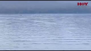 ¿Volvió Nahuelito: captan a un extraño animal en el lago Nahuel Huapi (2020)