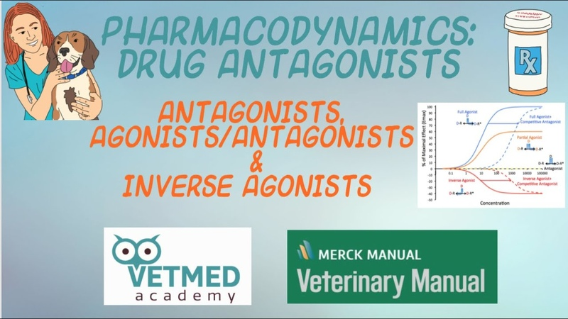 Фармакодинамика антогонисты и обратные агонисты Pharmacodynamics Antagonists and Inverse Agonists