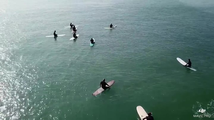 Серый кит незаметно подплыл к группе серферов