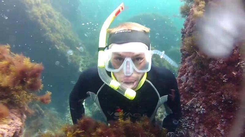 Подводный мир Черного моря мыс Сарыч октябрь