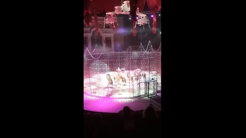 Волшебные фонтаны цирковое представление на Фонтанке