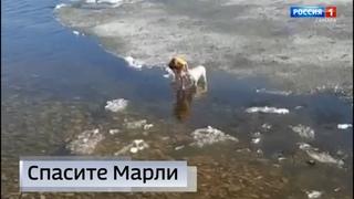 """""""Вести Самара"""" 20 апреля 9:00: Юный житель Тольятти бросился в холодную воду за своей собакой"""