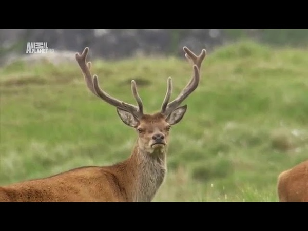 Неизведанные острова Гебриды Animal Planet HD Мир дикой природы