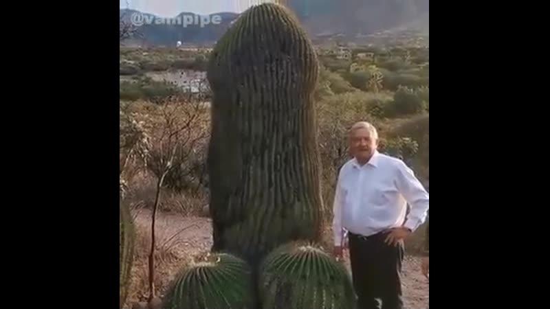 Мексиканская гордость