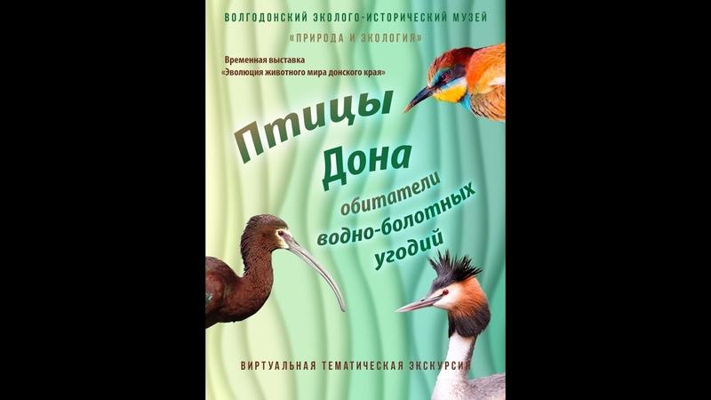 Птицы Дона обитатели водно-болотных угодий