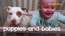 Adorable Puppies Babies