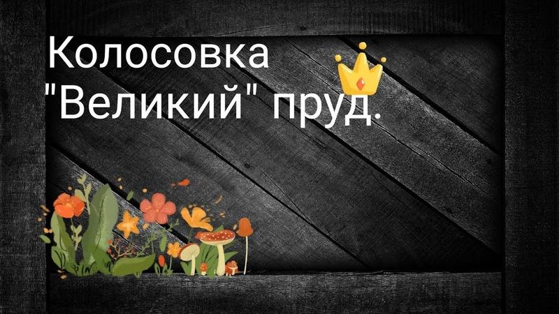 Колосовка ВЕЛИКИЙ пруд. Рыбалка в Калининграде. Ловля окуня на ультралайт.