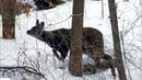 Трогательные спасения диких животных