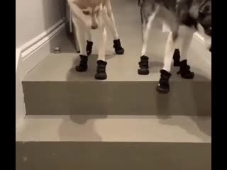 А мы в новых сапожках идем на прогулку ...