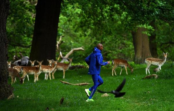 Олимпийский чемпион в беге на длинные дистанции Мо Фара тренируется в Ричмонд-парке, Лондон, Великобритания