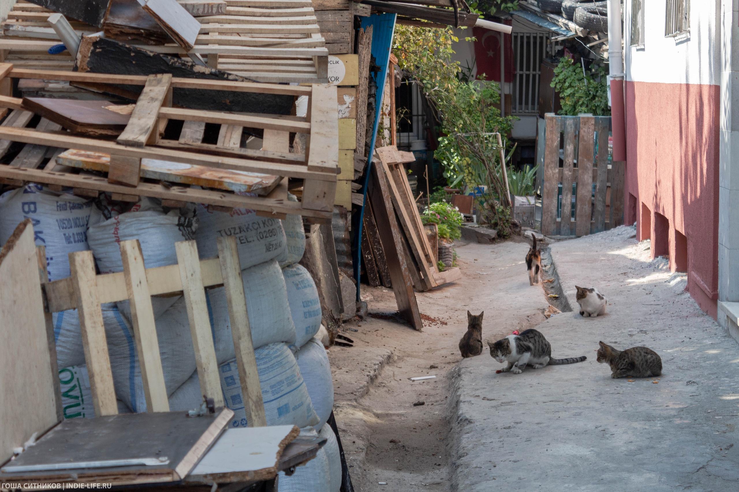 Коты в переулке
