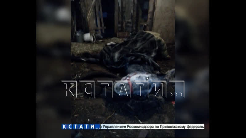 Частная конюшня в Дзержинске зарабатывает на лошадях-смертниках
