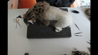Needle Felted Iberian Lynx