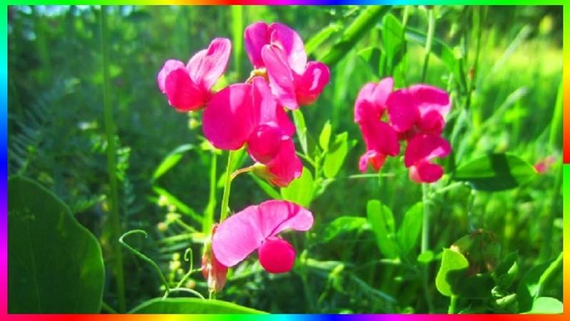 Природа родного края Полевые цветы Видео релакс🌸🌼🌻