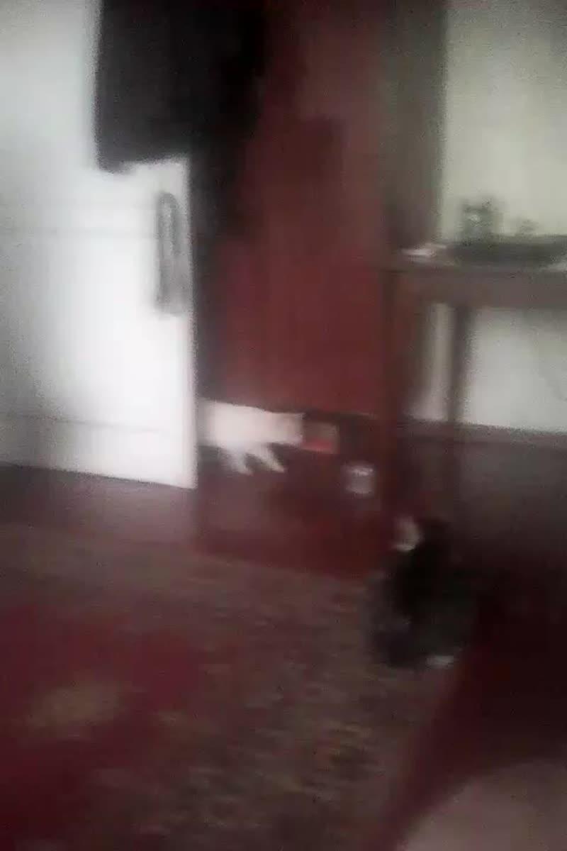 ЧУЖОЙ КОТ - 4 (ходит по квартире, наш Семка его контролирует).